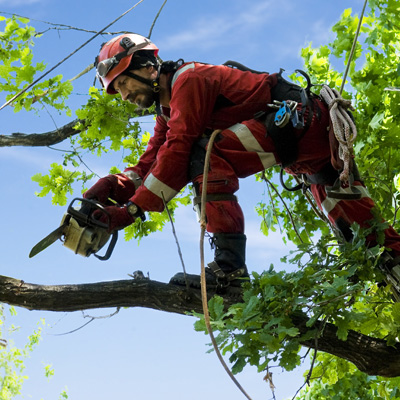 Arborist and Forestry Equipment